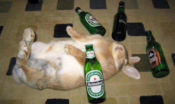 Image result for drunk easter bunny
