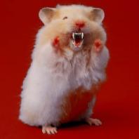 hamster5