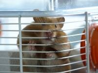 hamster8
